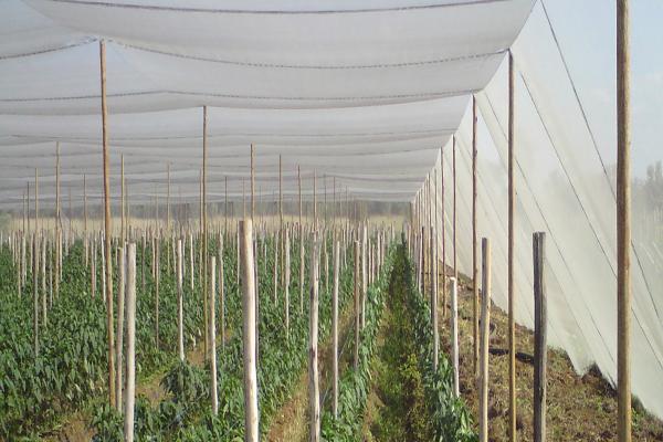 Bio Enerji ve Tarımsal Uygulama Tekstili